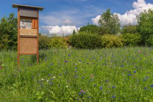 Wildblumenwiese-Insektenhotel